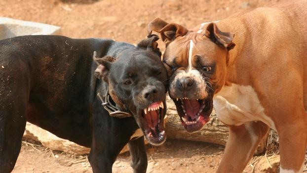 dog-fight