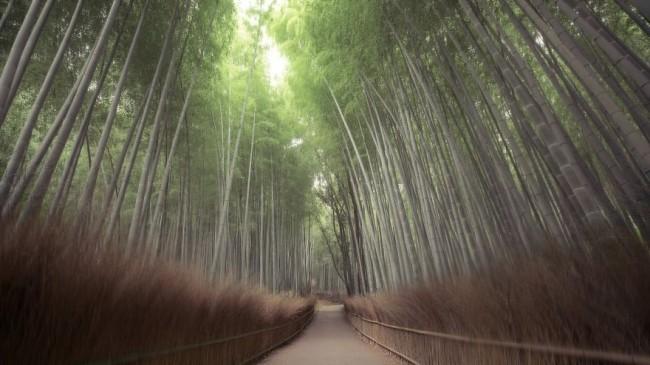 Arashiyama, Japan