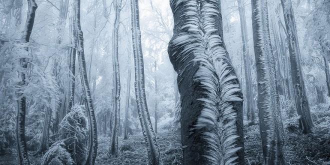 Τα 22 Ομορφότερα Δάση Του Πλανήτη……..