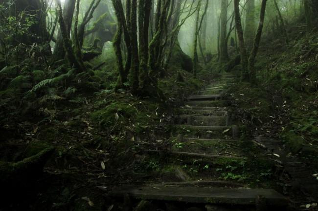 Chinese Hemlock Trail, Tapingshan, Taiwan