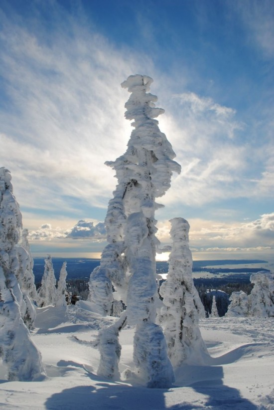 . Ghost Tree Forest Mt. Seymour, British Columbia