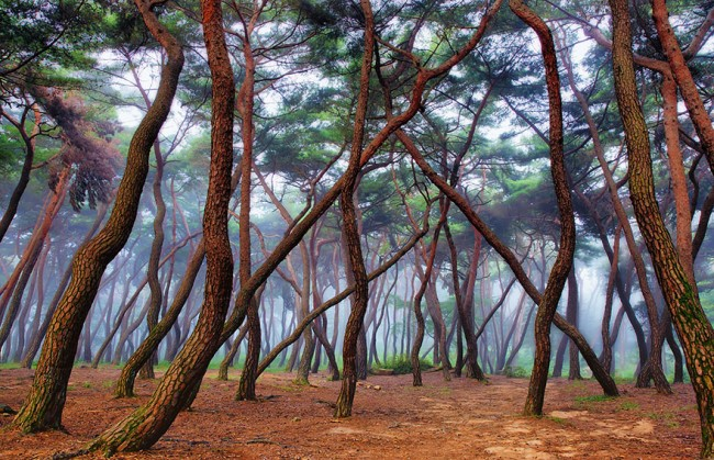 Misty Forest argentina