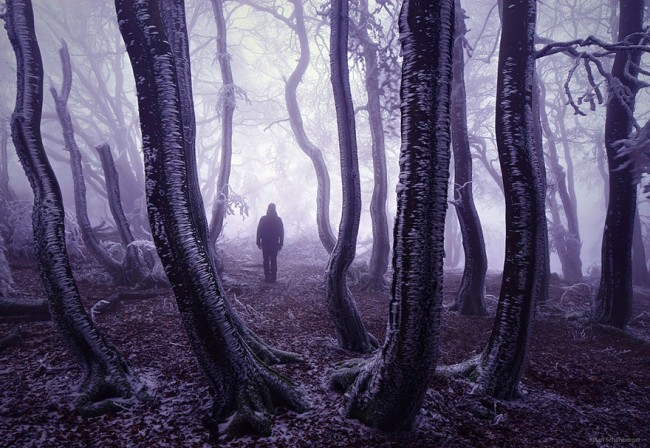 Mysterious Forest In Germany