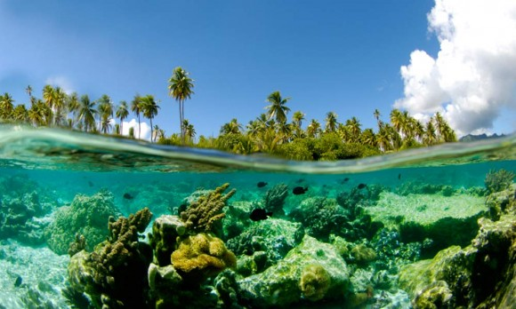 Coral Garden Ταϊτή    Ειρηνικός Ωκεανος